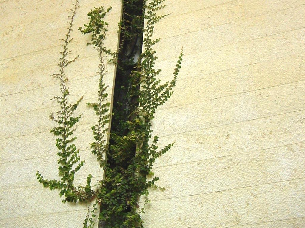 Michael_Singer_Vertical Garden_thumb